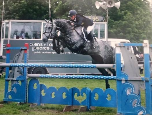 Photo - Perfect Junior / YR Team Horse