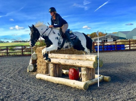 Photo - SUPER TALENTED JUMPING / EVENT PONY
