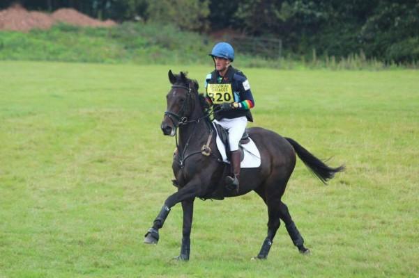 Photo - 16.1 hh full up 10 year old Irish sport horse
