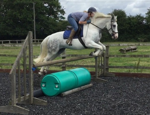 Photo - Experienced competition home wanted for this lovely pony