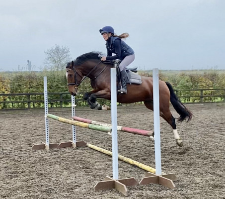 Photo - Super Eventing or Show Jumping Prospect