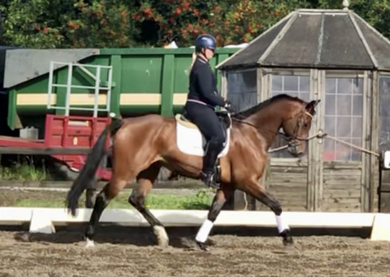 Photo - Fantastic Amateurs Dressage Horse