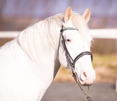 Photo - Thore Vom Pferdehof