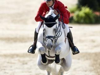 Photo - Select Stallions