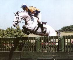 Photo - JRP Equestrian