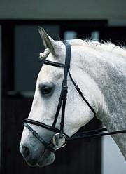 Photo - Brendon Horse &  Rider Centre