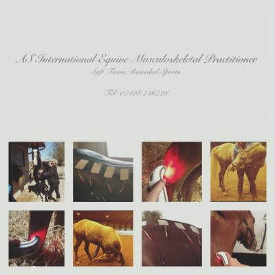 Photo - Amy Shipley International Equine  Musculoskeletal Practitioner