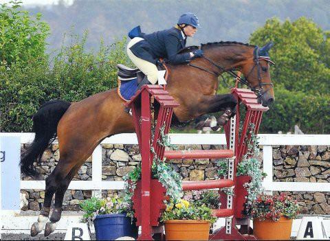 Photo - Horsechoice