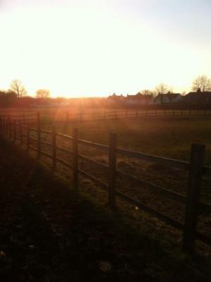 Kingsbridge Sports Horses Orchard Farm Oxford