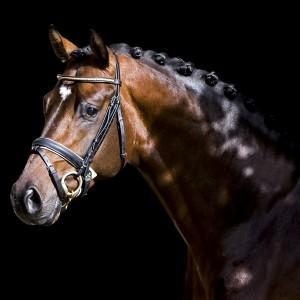 Photo - L G Sport Horses & Stud