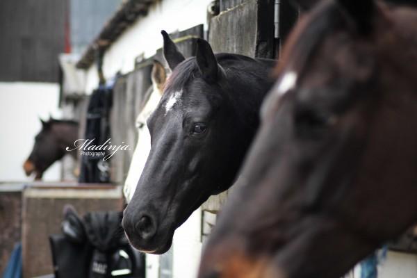 Photo - AP Equestrian