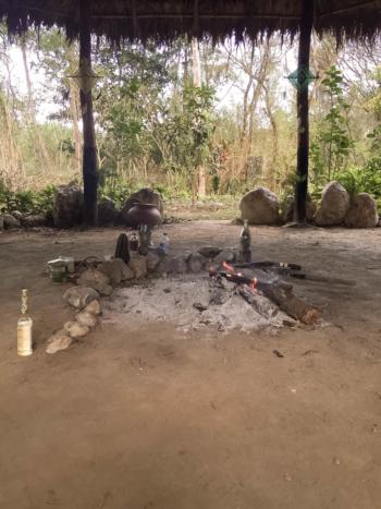 Wat is Ayahuasca