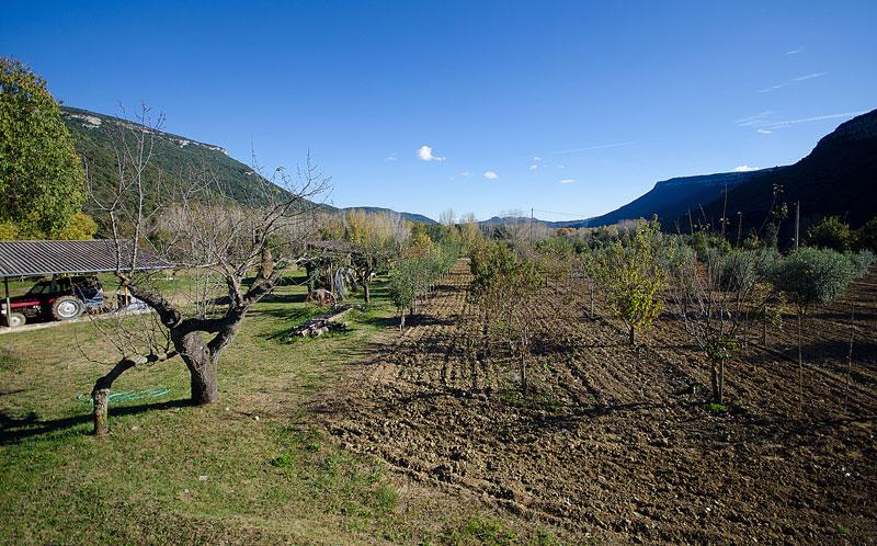 Masia-Restaurada-Cerca-de-Girona-Frutales