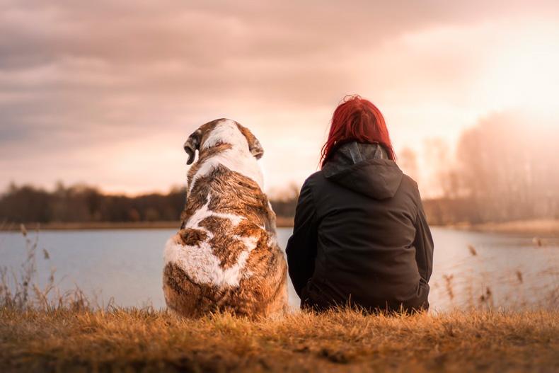 detrazione cure veterinarie animali