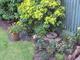 House_and_garden_006