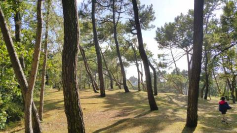 Le Touquet Forest- Le Touquet Holidays