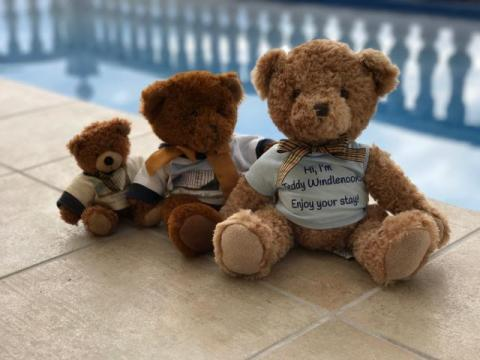 Three generations of Casa Windlenook Teddy Bear by the pool