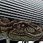 Elevator T-Rex [m]