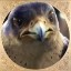 Falcon Boss