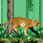 Pitfall Cheetah