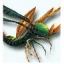 Winged Centipede [m]