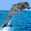 Seawolf, Fremantle