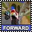 Forward: Rock Forest