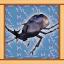 Dynastid Beetle Expert