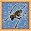 Longicorn Beetle Expert