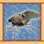 Cicada Expert