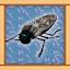 Jewel Beetle Expert