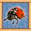 Ladybeetle Expert