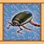 Aquatic Insect Expert