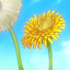 Seed of the Dandelion