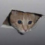 Cat Stuck in the Ceiling