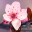Falling Down Flowers XIII (Sakura)