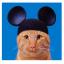 Mickey Cat