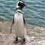Leon Penguin