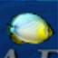 Fillet O'Fish
