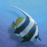DeJig - Aqua World