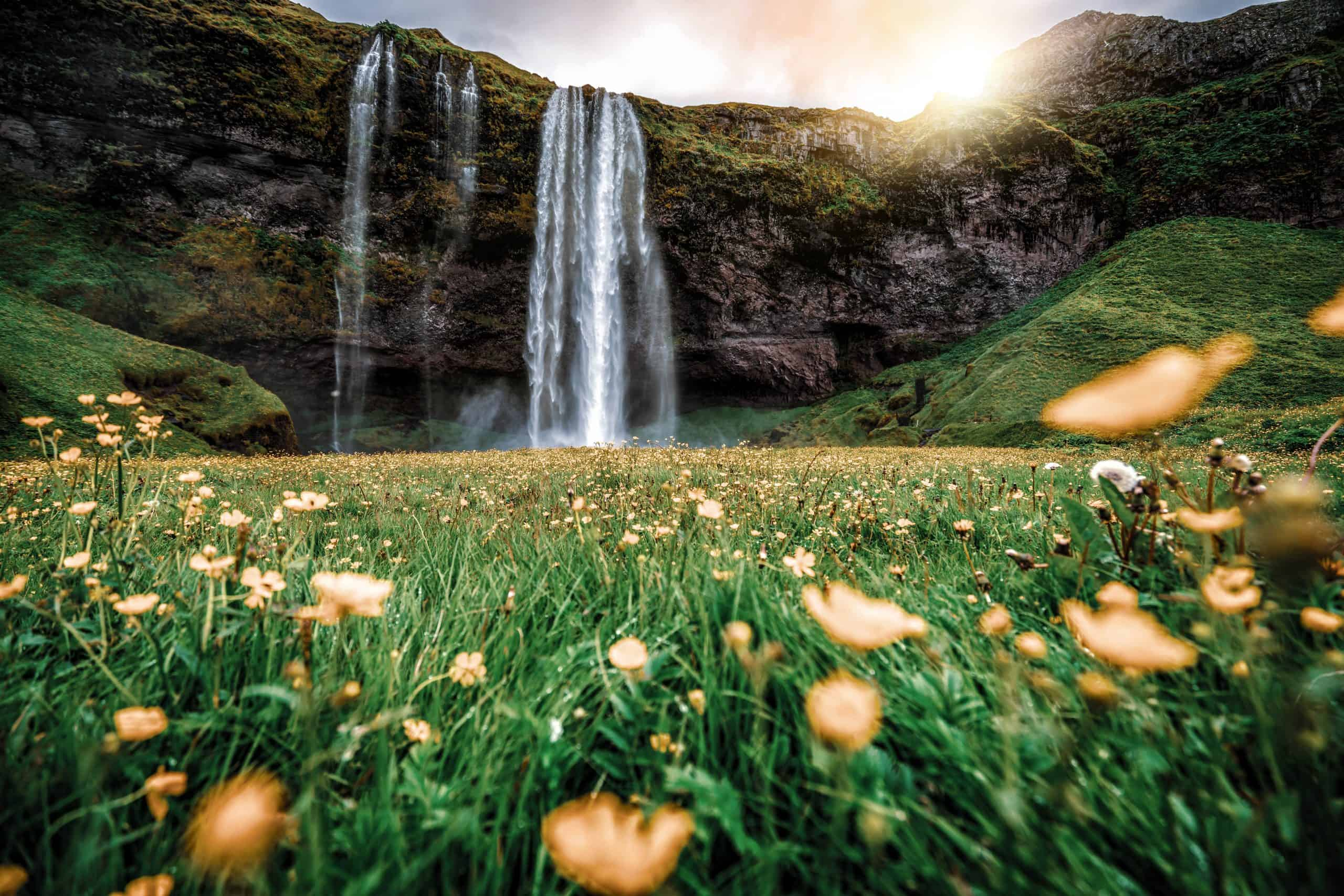 View of Seljalandsfoss Waterfall with spring flowers in Iceland