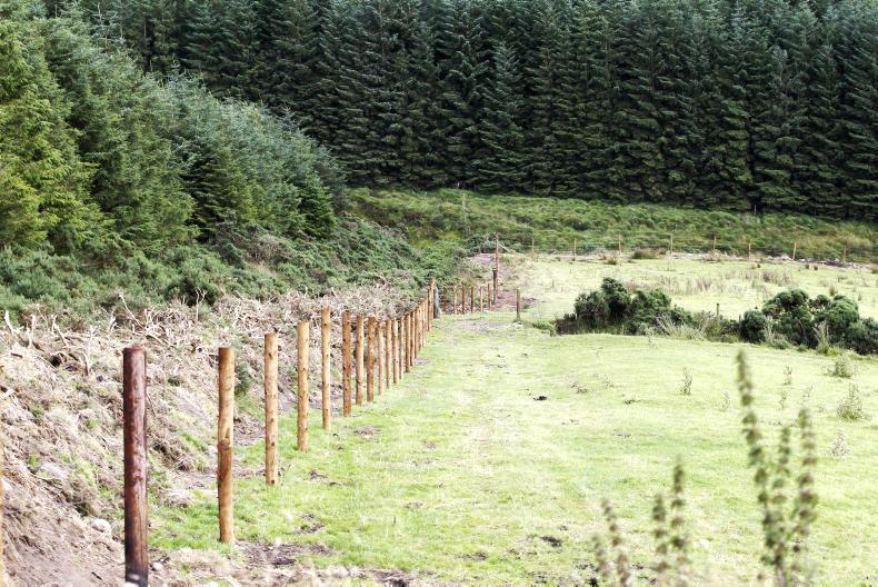 No plans for deer fencing at Killarney National Park - Irish Farmers Journal