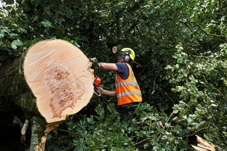 Who is responsible for a fallen tree? 16 January 2021 Freesearchsearch