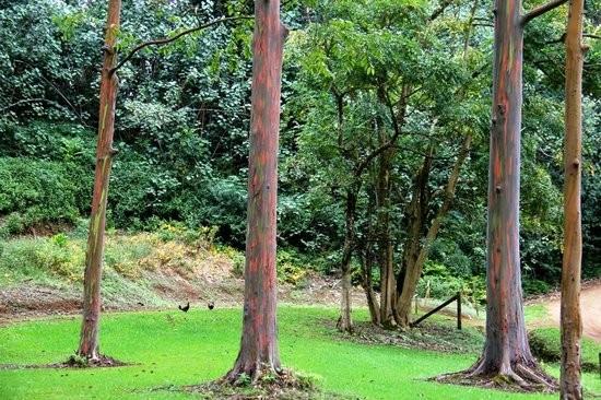 """""""keahua-arboretum.jpg"""""""