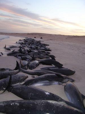 Delfinii au sau nu vedere - Viziune plus și minus care este diferența