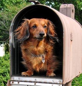 Mantenere Cani Su Una Pista AUTOADESIVO ADESIVI SAFETY SEGNI BUSINESS