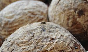 Petits pains aux olives