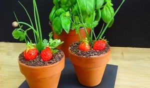 Fraisier en pot, mousse fraise et Pitacou Tomate de Provence