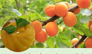 Crème dessert bavaroise aux abricots