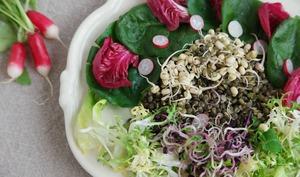 Pousses de soja germées
